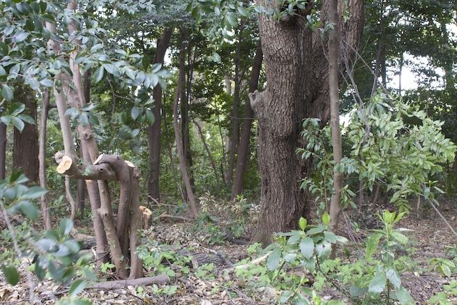 84107森に行って森ガールを探してみたのアイキャッチ