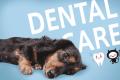 犬の寿命にも関わる問題。無麻酔で犬の歯石を取ってもらった結果・・・のアイキャッチ