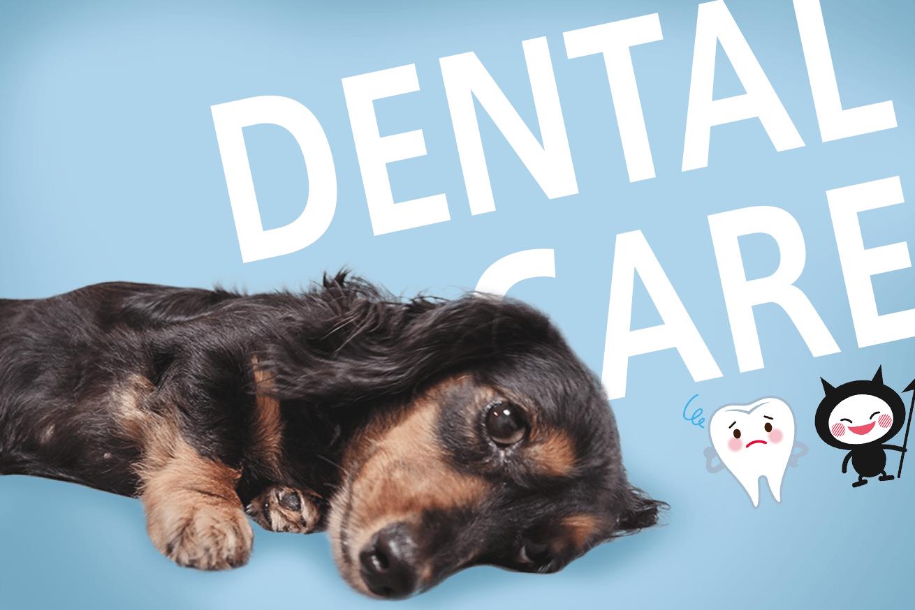 295935犬の寿命にも関わる問題。無麻酔で犬の歯石を取ってもらった結果・・・のアイキャッチ